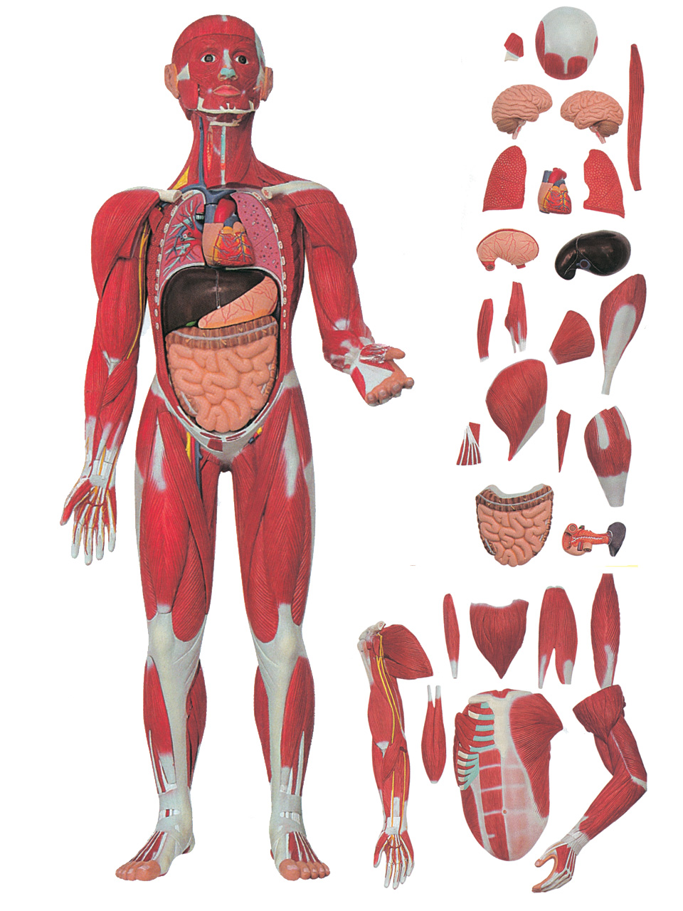 effetti del propecia sul corpo